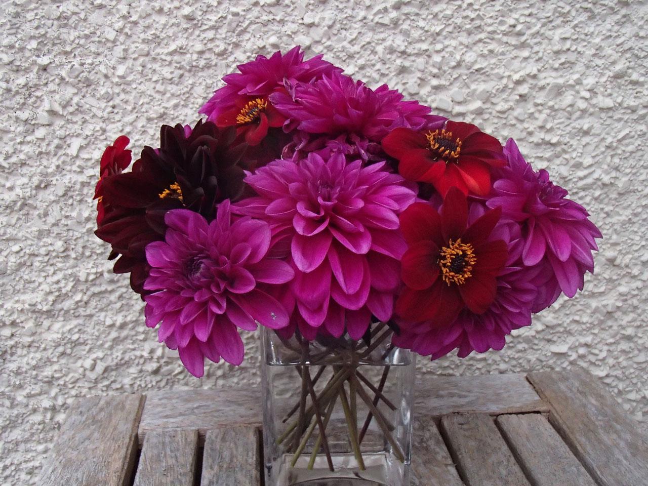 Vase of dahlias